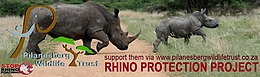 Pilanesberg Wildlife Trust Rhino Protection Antipoaching fund
