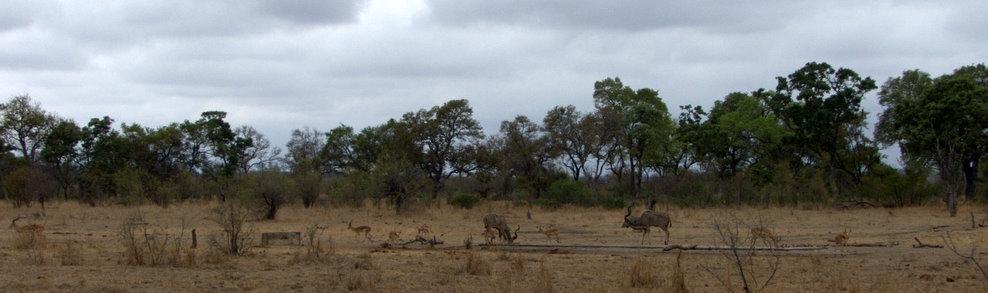 Report On Orpen Restcamp In The Kruger National Park