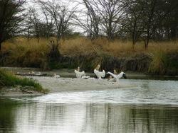Trip Report Nata Bird Sanctuary Community Camp